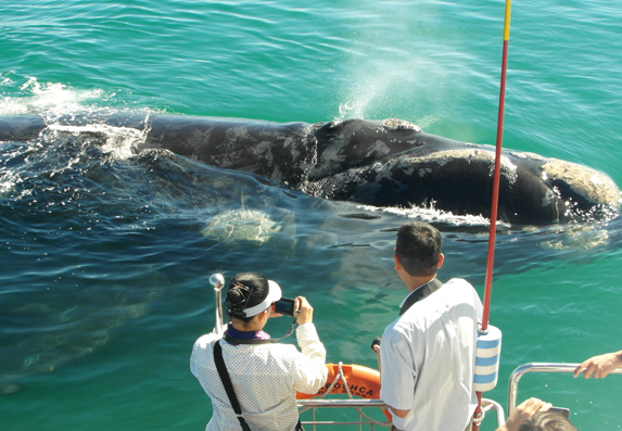 whale-watching-trip